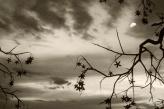 Parque da luz© Rosângela Fialho Photography