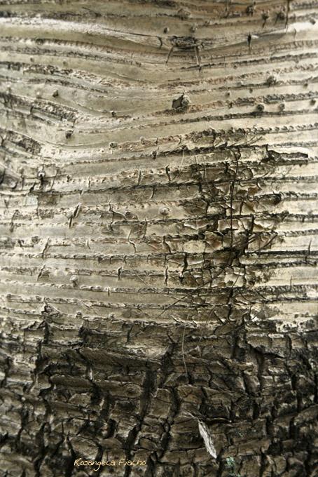 """Foto Rosângela Fialho - Textura """"tronco da árvore"""""""