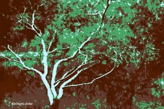 Árvores | Série Botânica, Paisagem
