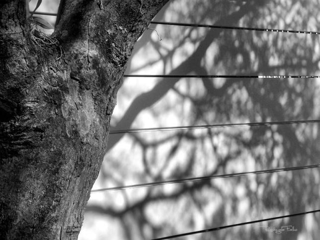 Reflexo Galhos, Árvore