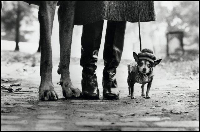 Foto: NY 1974, Elliott Erwitt